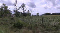 Corn crops on farm destroyed by tornado after severe storm Stock Footage