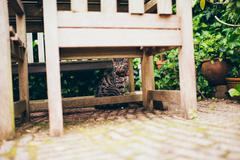 Tabby cat sitting under garden table Stock Photos