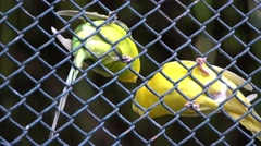 Two parrots green macaw in zoo behind the wire Stock Footage
