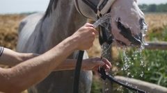 Horse drinking water out of spray nozzle on a hot summer evening. Close-up Stock Footage