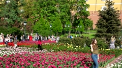 People admire the tulips in full bloom in the Alexander garden in Moscow Kremlin Stock Footage