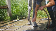 Horse getting cleaned. Guy cleaning legs of the horse. Slowmotion, close-up. Stock Footage