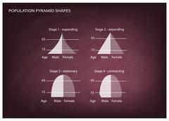 Four Types of Population Pyramids on Chalkboard Background Stock Illustration