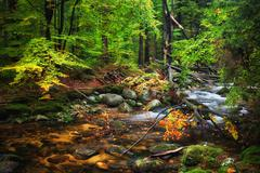 Forest Stream With Fallen Tree Stock Photos