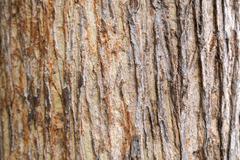 Teak tree bark texture Stock Photos
