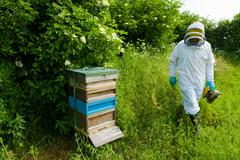 Beekeeper wearing protective clothing approaching bee hive - stock photo