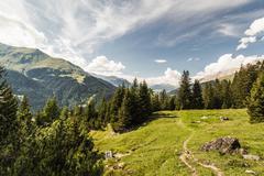 Alp Flix, Savognin, Graubuenden, Switzerland Stock Photos