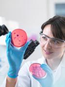 Scientist examining petri dish containing bacterial culture grown in laboratory Stock Photos