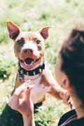 Over the shoulder portrait of pit bull terrier with female owner - stock photo