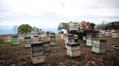 Bee yard with beekeepers Stock Footage