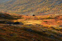 Autumn coloured valley near Malaya Belaya river, Khibiny mountains, Kola Stock Photos