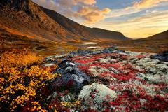 Autumn coloured valley and Malaya Belaya river, Khibiny mountains, Kola Stock Photos