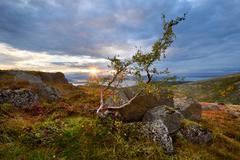 Twisted tree and distant Lake Imandra, Khibiny mountains, Kola Peninsula, Russia Stock Photos