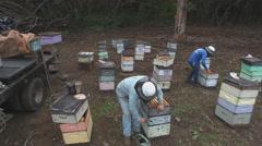 Beekeepers aerial boxes Hawaii 4k Stock Footage
