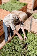 Mature woman tending to young plants in garden - stock photo