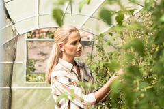 Mature woman tending to plants in greenhouse Stock Photos