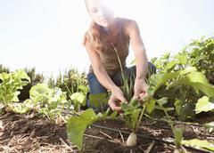 Mature man tending to plants in garden Stock Photos