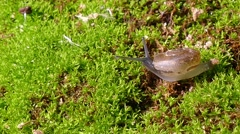 Small snail Stock Footage