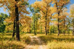 Sunny Day In Autumn Sunny Forest Trees Stock Photos