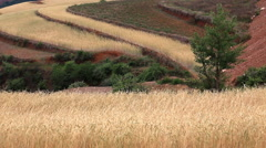 China countryside tilt up Stock Footage