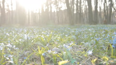 Glade of snowdrops with ladybugs and sun Stock Footage