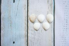 Sea shells form olympic rings - stock photo