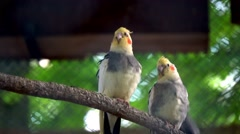 Different types of Parrots in zoo cage Stock Footage