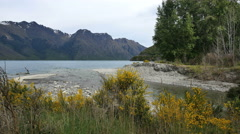 New Zealand Creek edged by broom enters Lake Stock Footage