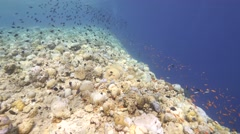 Clear blue water tropical reef Stock Footage