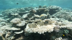 Clear ocean coral reef bleached Stock Footage