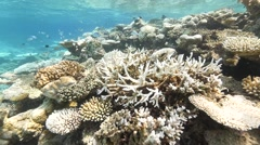 Climate impacts coral reef bleaching Stock Footage