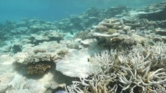 Coral bleached reef damage Stock Footage