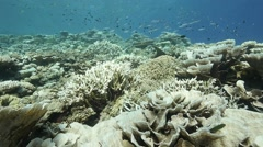 Immaculate reef bleached Stock Footage