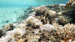 Pan over shallow bleached coral reef Stock Footage
