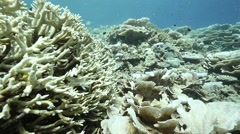 Upturned corals Stock Footage