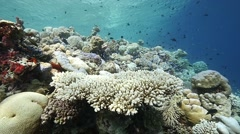 Pan out wide beautiful reef Stock Footage