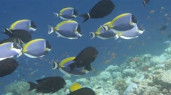 Coral reef fish Stock Footage