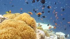 Fish fireworks underwater Stock Footage