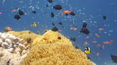 Reef rainbow clear water slow motion Stock Footage