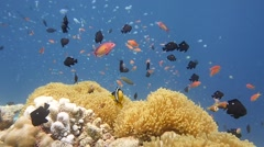 Reef colour fish Stock Footage