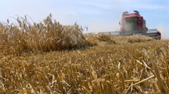 Harvesting of wheat with a combine harvester Stock Footage