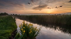 Beautiful view of a small river and blooming yellow iris. Time Lapse. Stock Footage