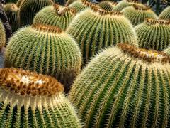 Cactus Garden in Lanzarote Stock Photos