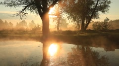 Amazing foggy morning at a small river. Stock Footage