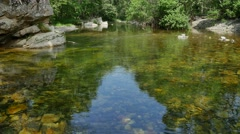 UHD shot of the peaceful river in a deep forest Stock Footage
