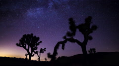 Joshua Trees and Milky Way Timelapse during Perseid Meteor Shower Stock Footage