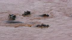 HIPPOPOTAMUSES TALEK RIVER MAASAI MARA KENYA Stock Footage