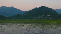 Sunset on Lake Skadar. Plantation of water lilies Stock Footage