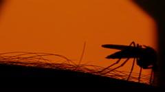 Mosquito blood sucking on human skin on sun background - stock footage