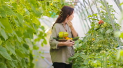 Young woman with basket of greenery and vegetables in the greenhouse. Time to - stock footage